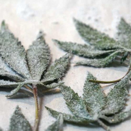cannabis CBD food